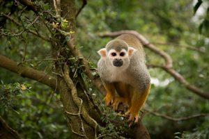 monkey-1807174_640